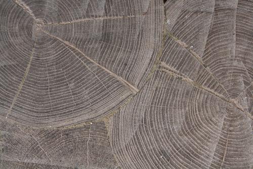 Wood in Saverio Pastor's workshop in Venice