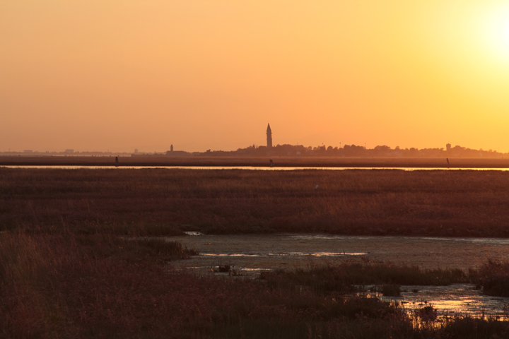 marshy land at sunset in Venice