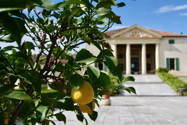 Lemon trees at Villa Emo by Andrea Palladio, Fanzolo
